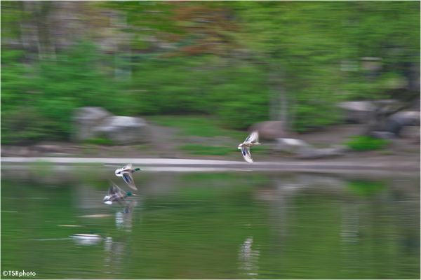 When the camera fly faster than Duck:-)