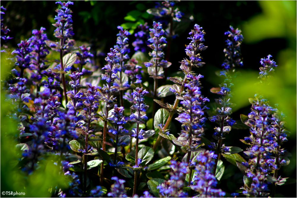 Gardens colours