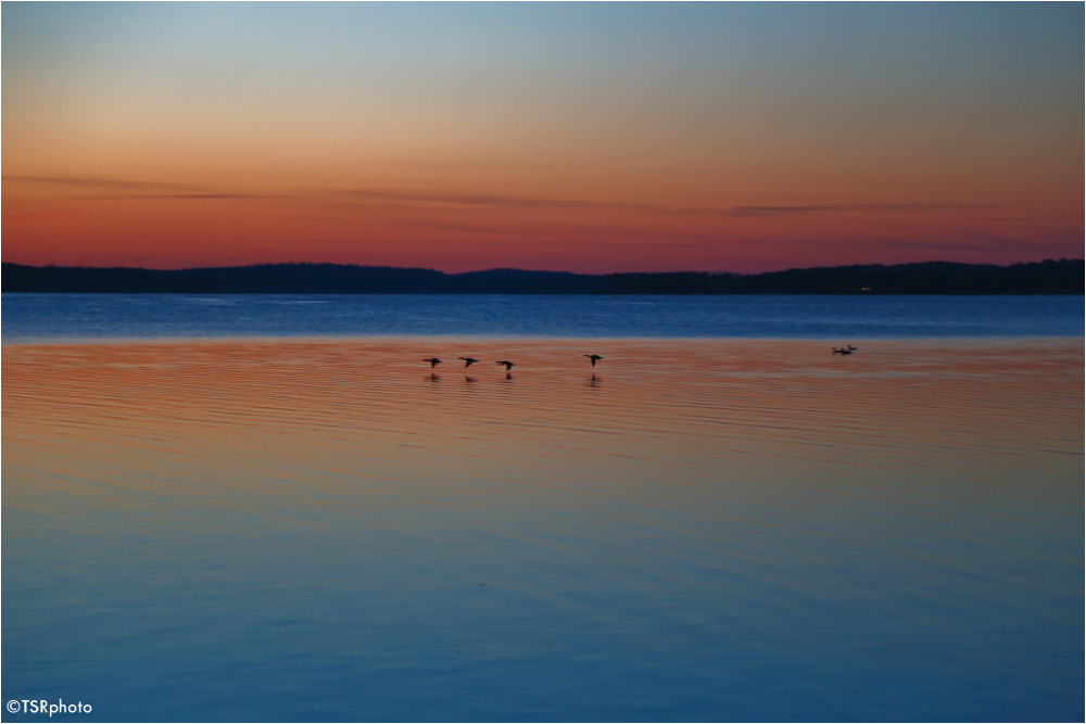 Ducks after sunset