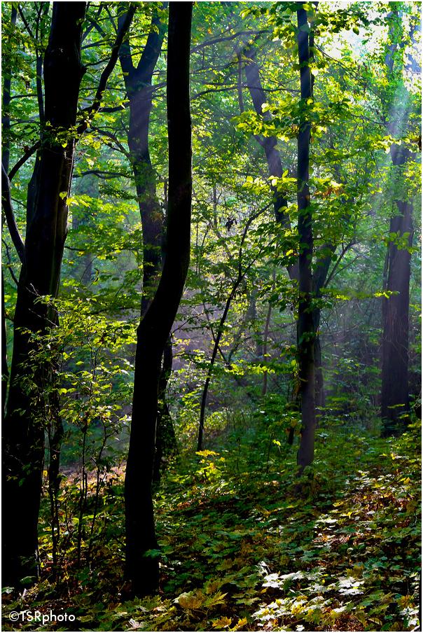 Through the trees 3