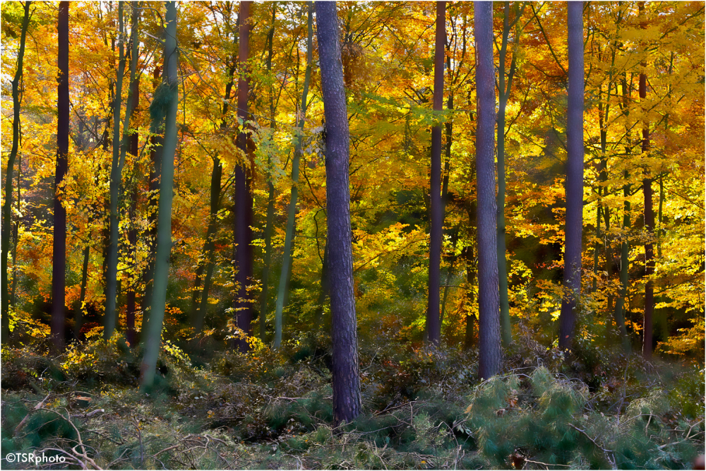 Through the trees 2