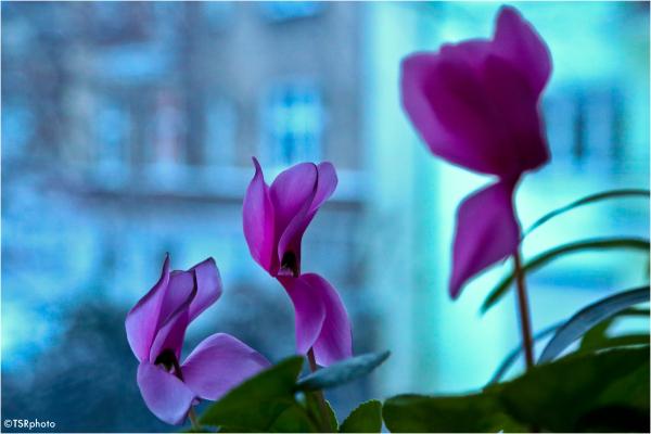 Flowers in Lens.