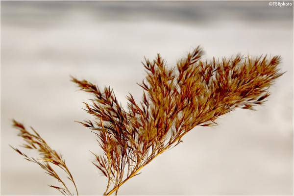 Gentle wind
