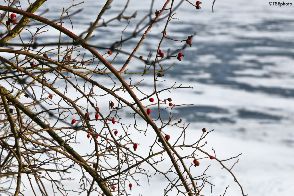 Spring soon :-)