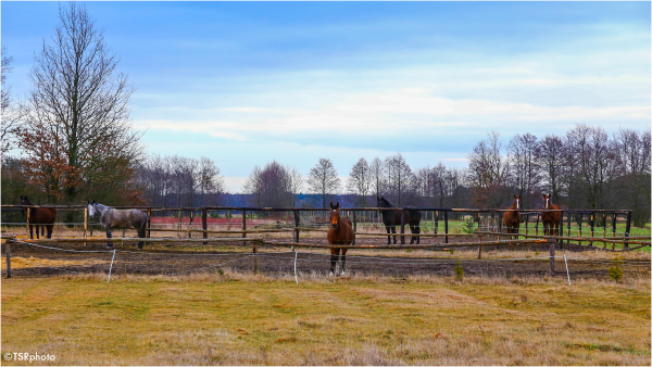 Landscape with the Horses 2/4