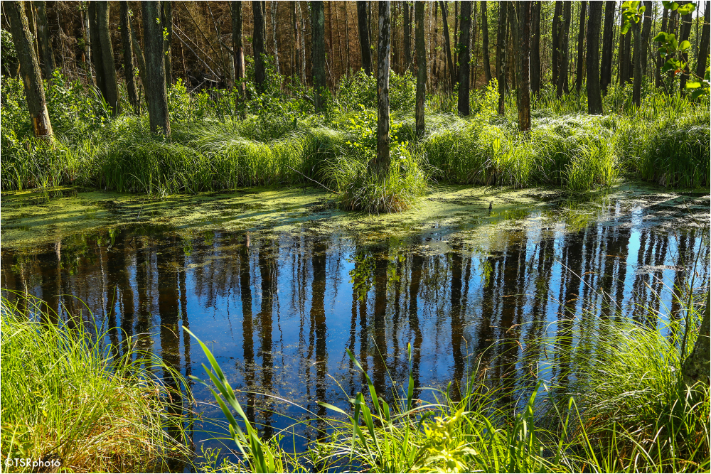 In the swamp 2