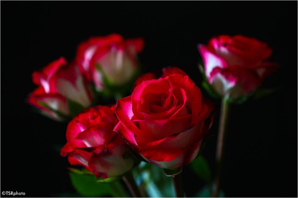 Roses 1/3