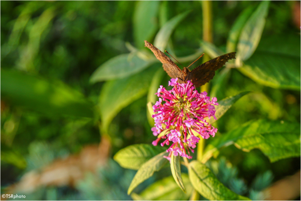 butterfly plant summer nature