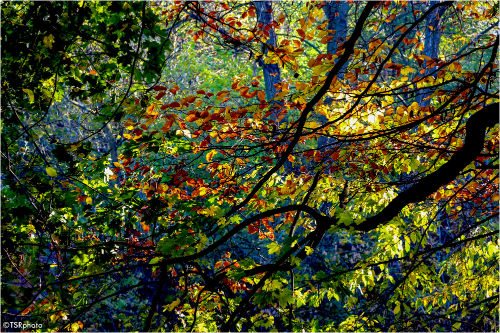 Colours of forest 1/5