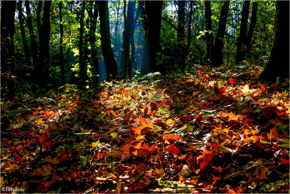Colours of forest 5/5