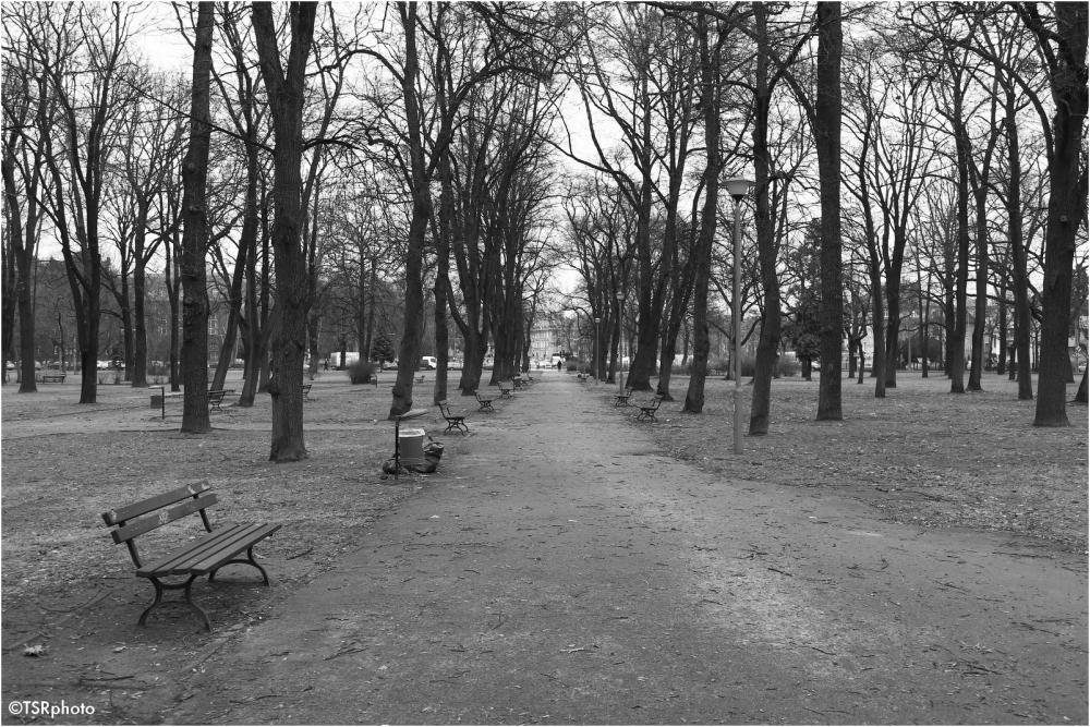 The deserted park