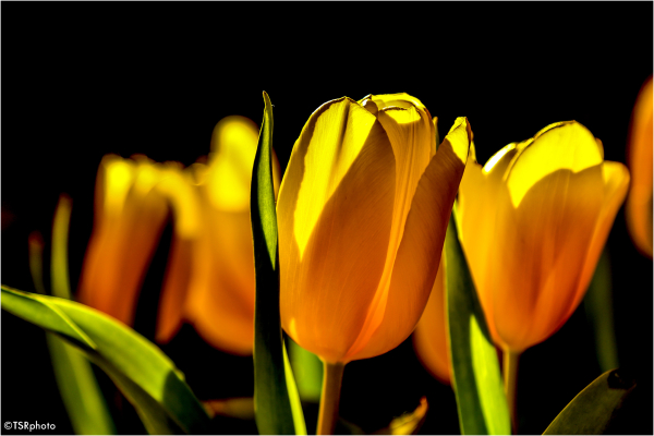 Sings of spring ?
