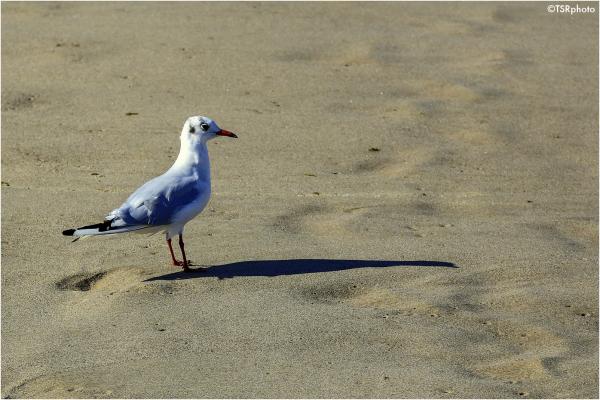 On the beach 1/2