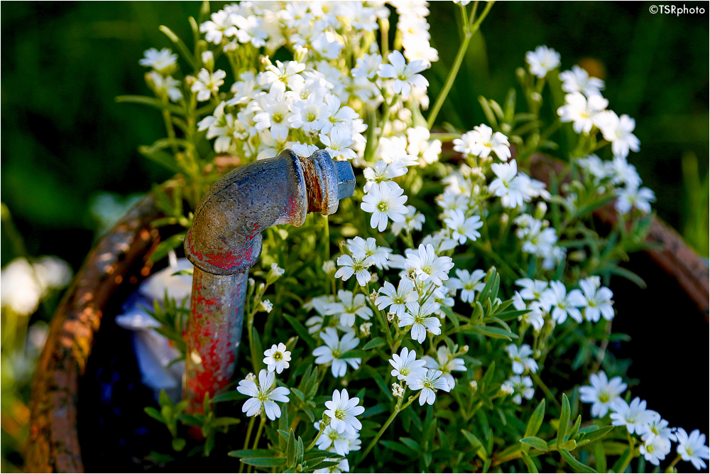 Pipe with the flowers