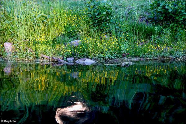 Green shore