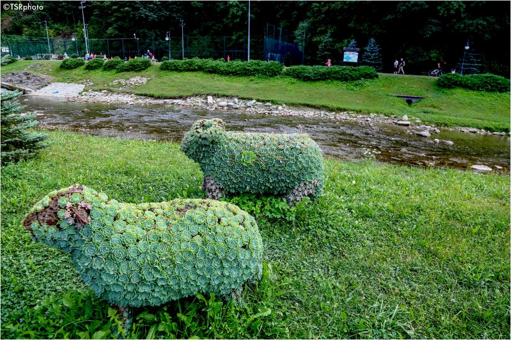 Green sheep