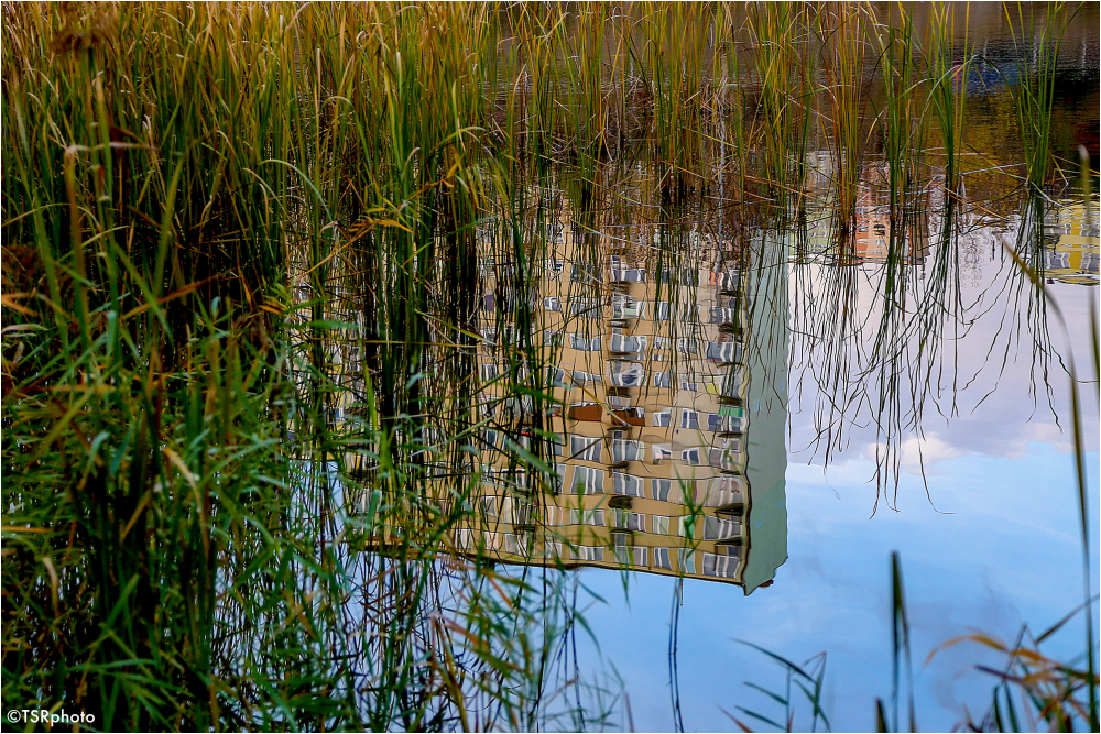 Between the reeds