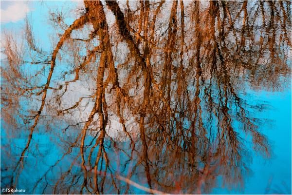 Blurred trees