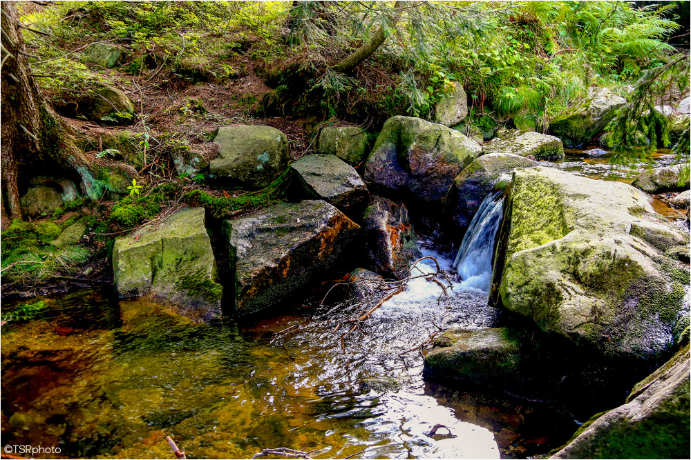 Stream in the Forest 2