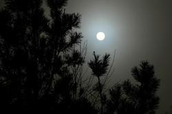 Bright Night or Foggy Day ?