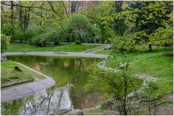 Pond in the city