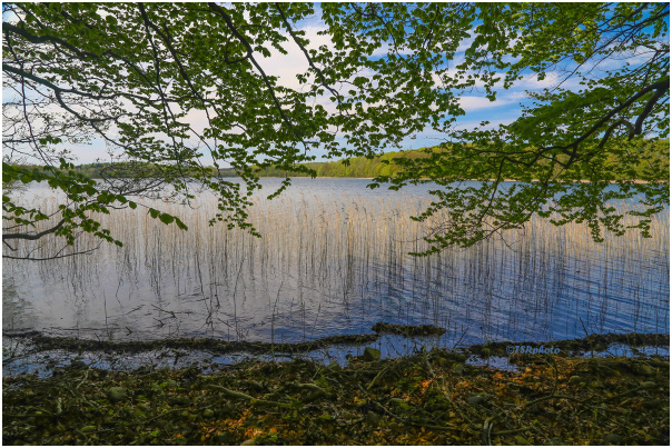 Lake and branches