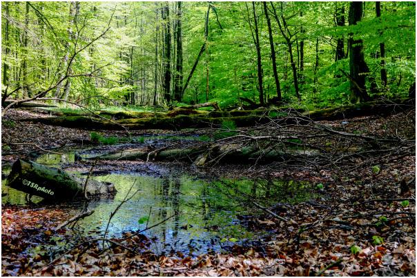 Primeval forest  2