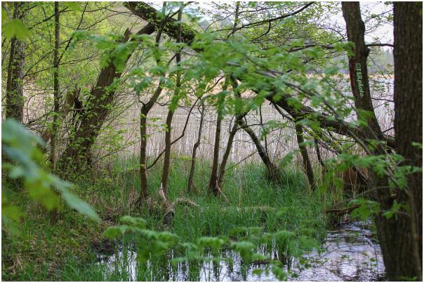Primeval forest  3
