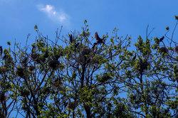 Cormorants Island 2