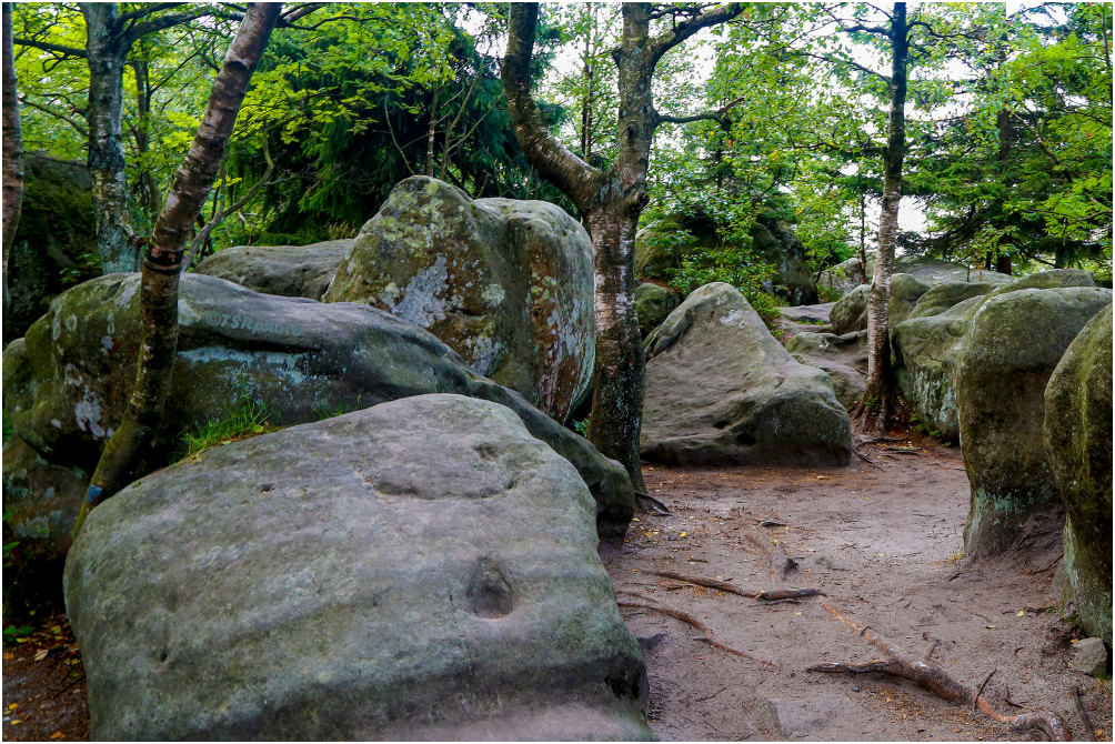 Rocks in the Forest 2