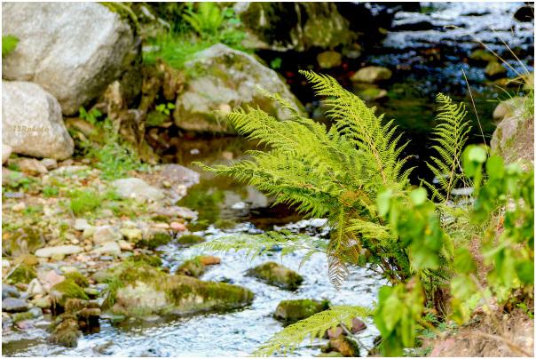 Near the stream