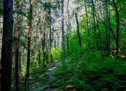 Still Forest  (long way)