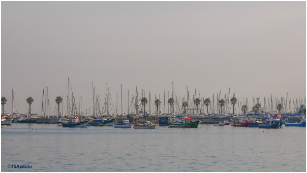 Marina - Cascais