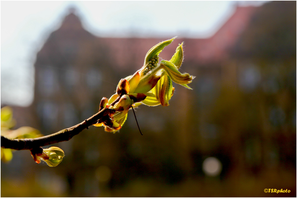 Spring in the city 2