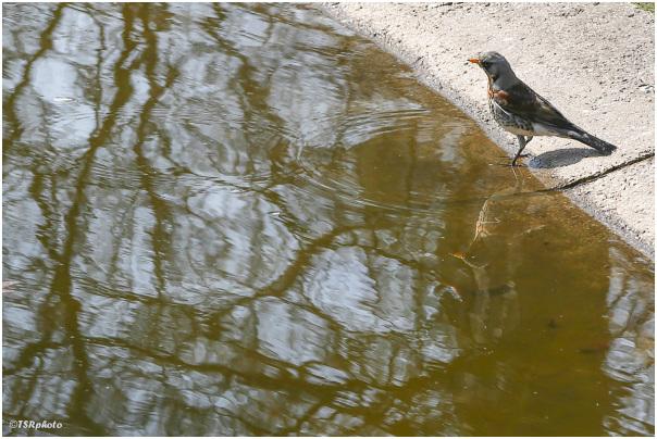 Bird by the Pond