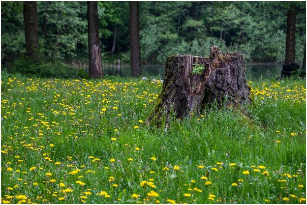 Wild Meadow 2