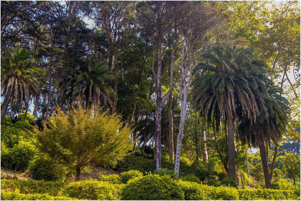 Sintra Plants