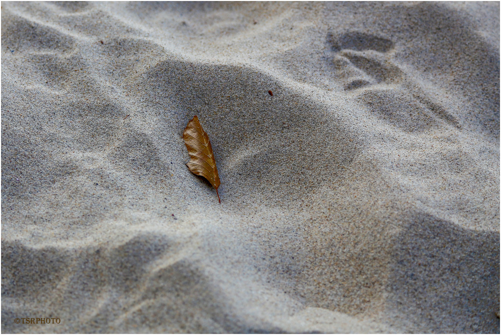 Leaf on the Beach