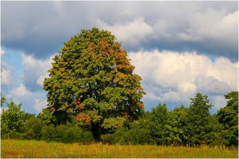 Autmnal Tree