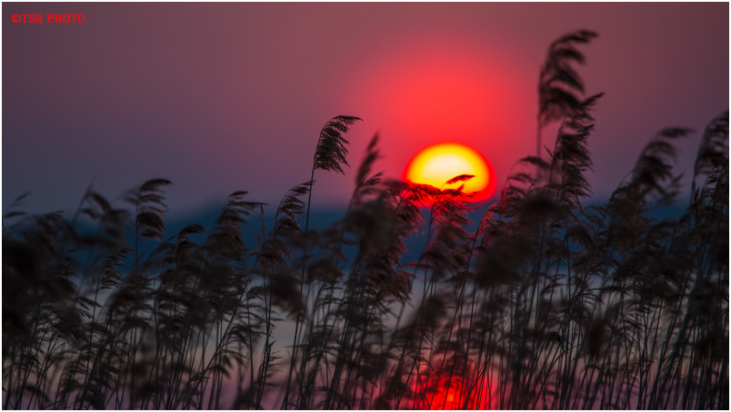 Aminus3 Featured photo Sunset  at the Lake 2 | 22 June 2019