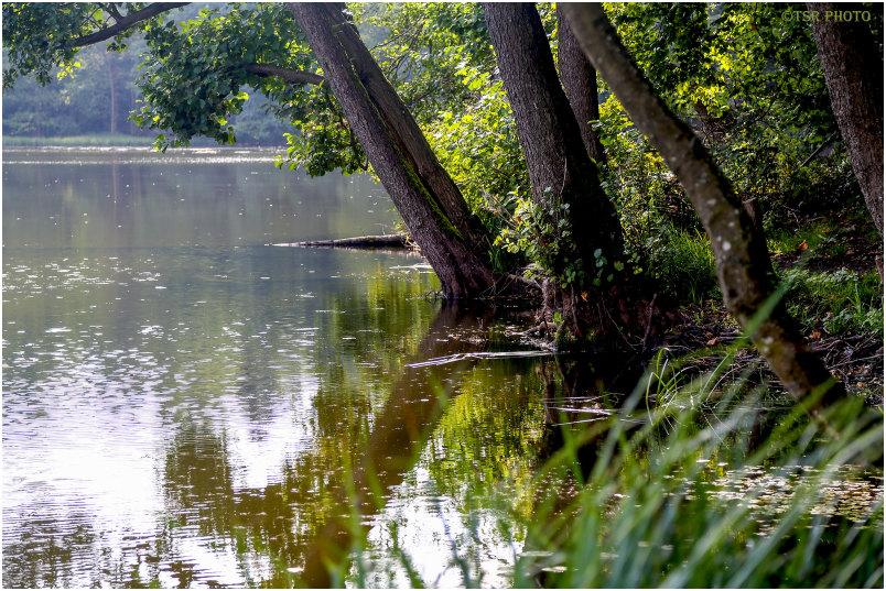 Midday at the lake