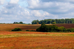 Red Fields 2