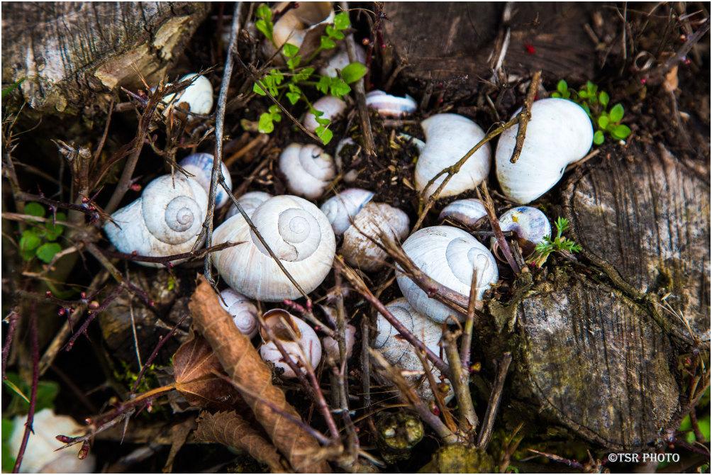 Snail shelter