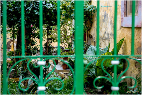 Trapped greenery
