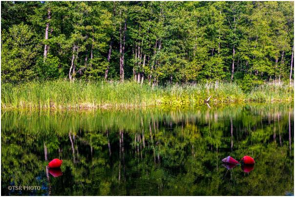 Forest gulf 3