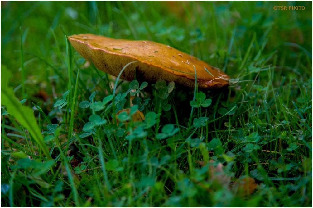 Under mushroom