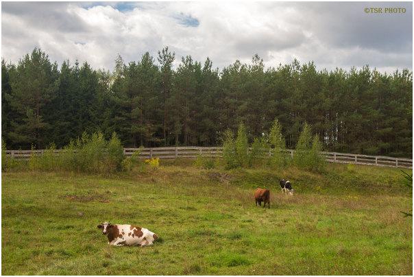 Rural view 4