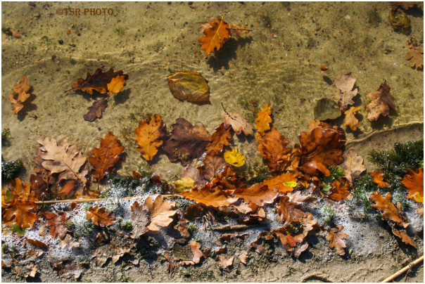 Autumn Shore