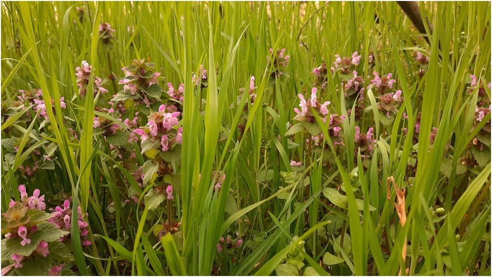 Sounds of Grass