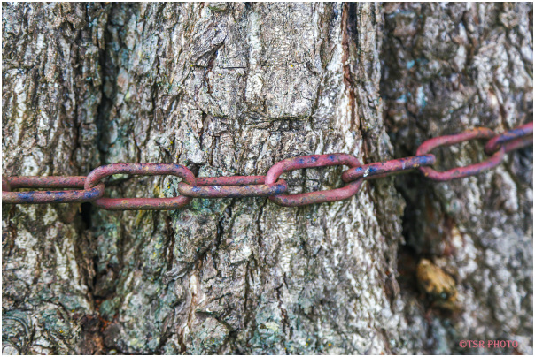 Trapped Tree